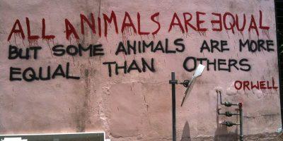 animal-farm-kapak